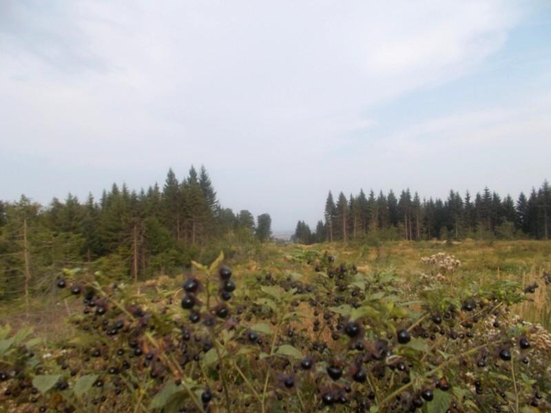 Pădurea Corlatei