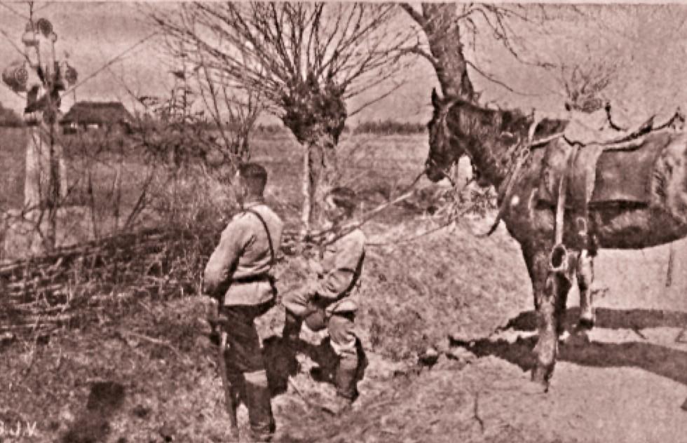 Bucovineni, pe frontul din Galiţia