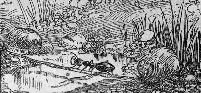 1919 Rasaritul 2