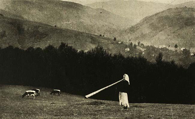 Ţărăncuţă cu tulnic, pe muntele Găina
