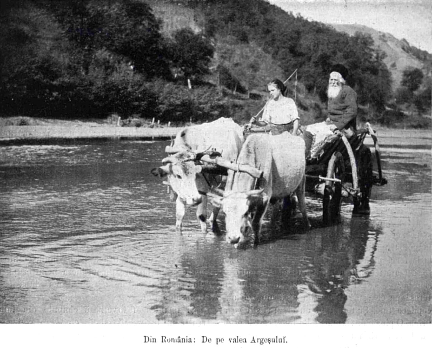 Argeseni LUCEAFARUL n 17 18 1906 p 375