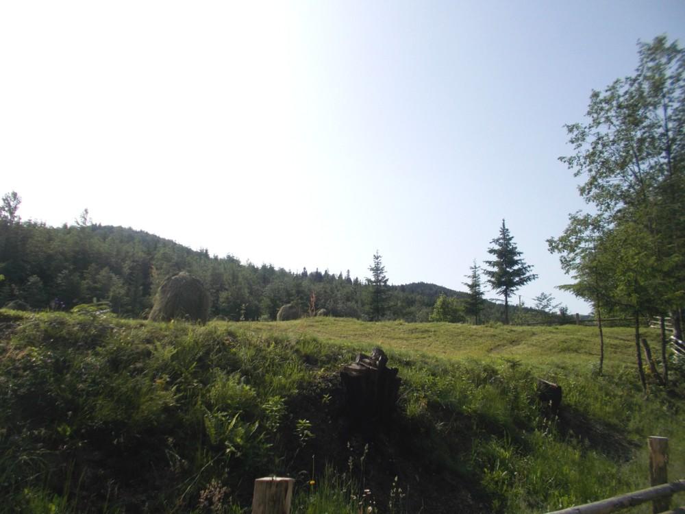 Bucovina 4