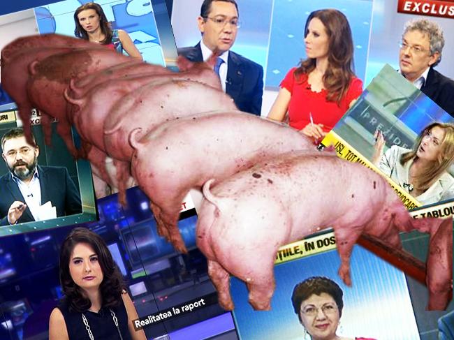 Porcii: avem lături sub RT. Vedeţi?