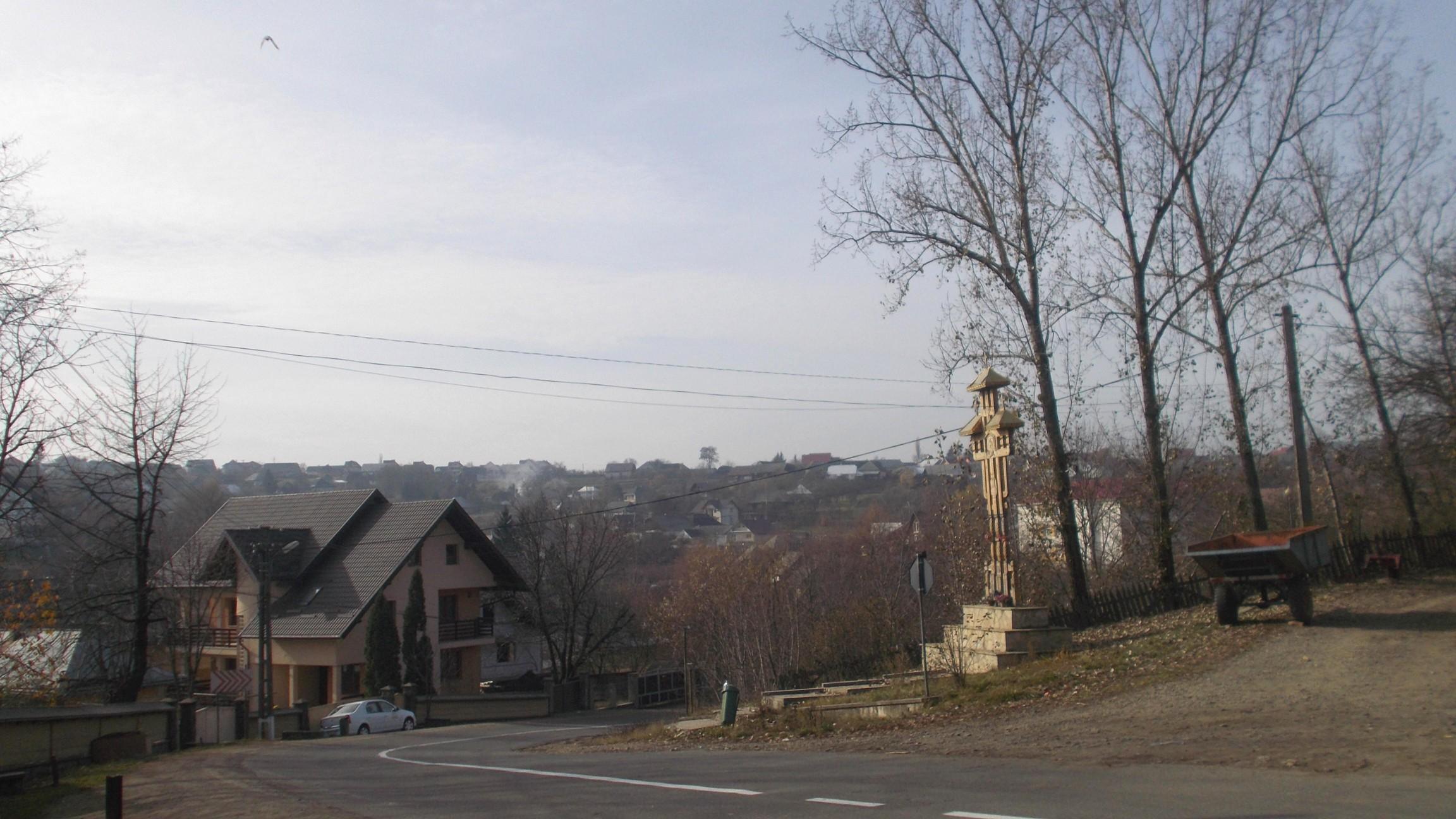 Cajvana de lângă Stejar