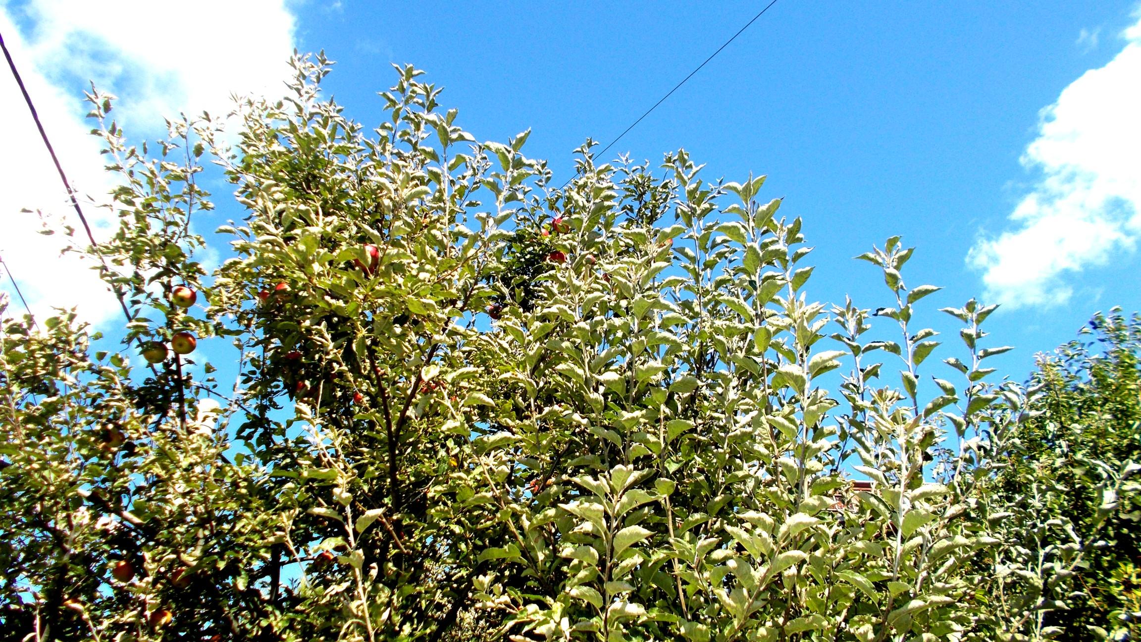 Fructele cerului