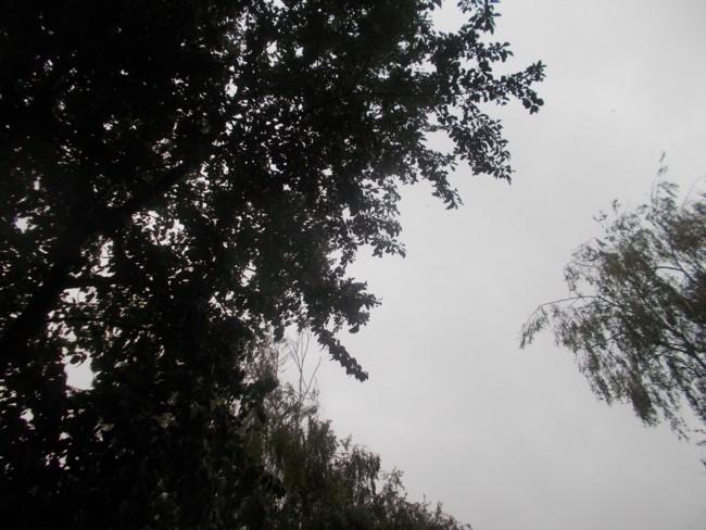 Cerul ploii 1