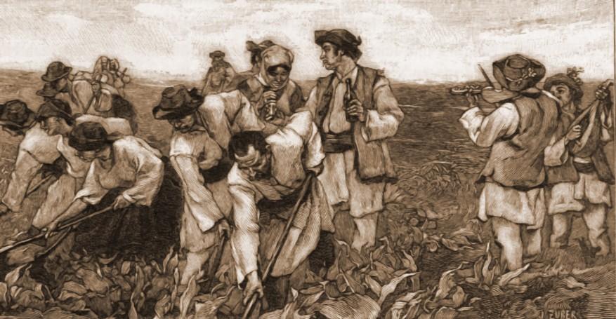 Claca, la români – desen de Julius Zalaty Zuber (1867-1918)
