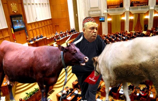 """Deputatul PSD Ion Stan: Oi colega, în politică nu faci """"Muuu! Nuuu!"""", decât când eşti în opoziţie!"""