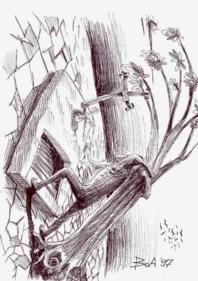 Desen de Ovidiu BOA
