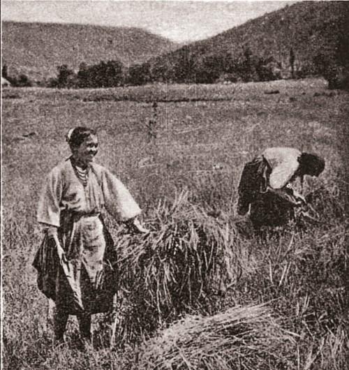 Iorga Rusoaice din Bugeac