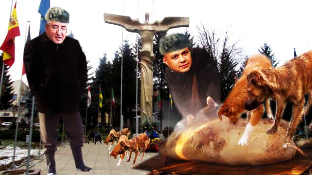 Lungu: Dragi suceveni, ma opun cilor ci zâc cî Suceava ari maidanezi,  confundând porcii cu maidanezii!