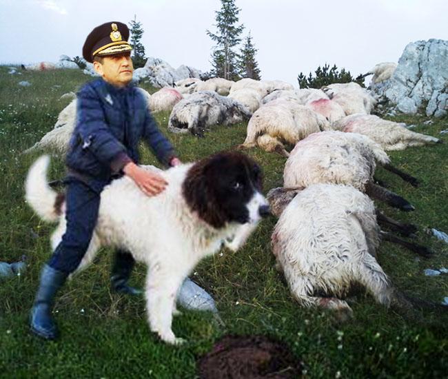 Generalul Oprea: Mioriţa a pierit, cu oile, în scop profesional!