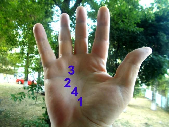 1 – linia vieţii; 2 – linia capului; 3 – linia inimii; 4 – linia destinului