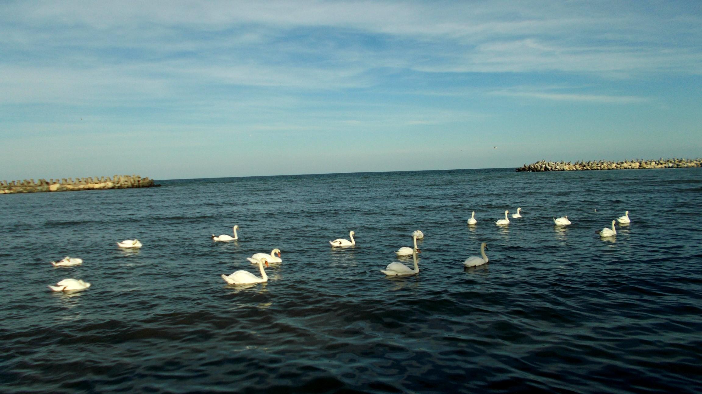 Marea Lebede