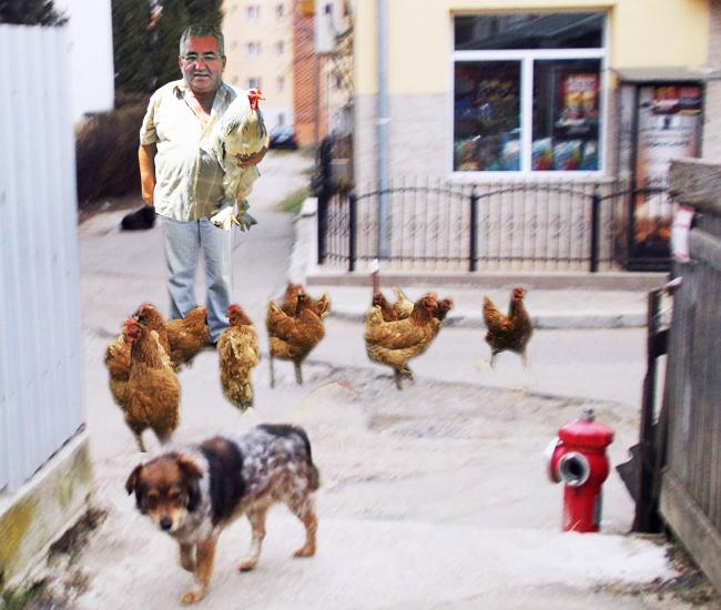 Ion Lungu: Cum îmi plac găinăriile ouătoare, nu e normal să le apăr cu poliţia mea comunitară?
