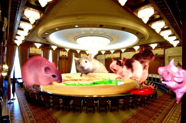 Şoarecii: Nouă ne place România!
