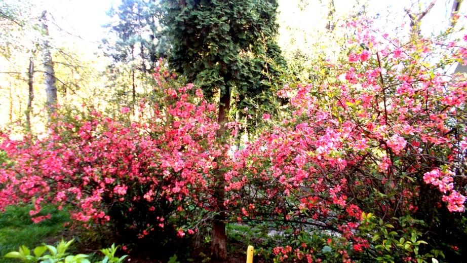 Pământul a avut o fiică, primăvara, iar numele ei este Maia (luna Mai)