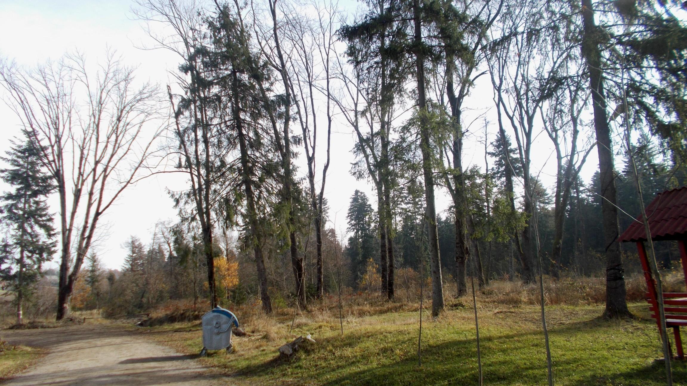 Pădurea care moare