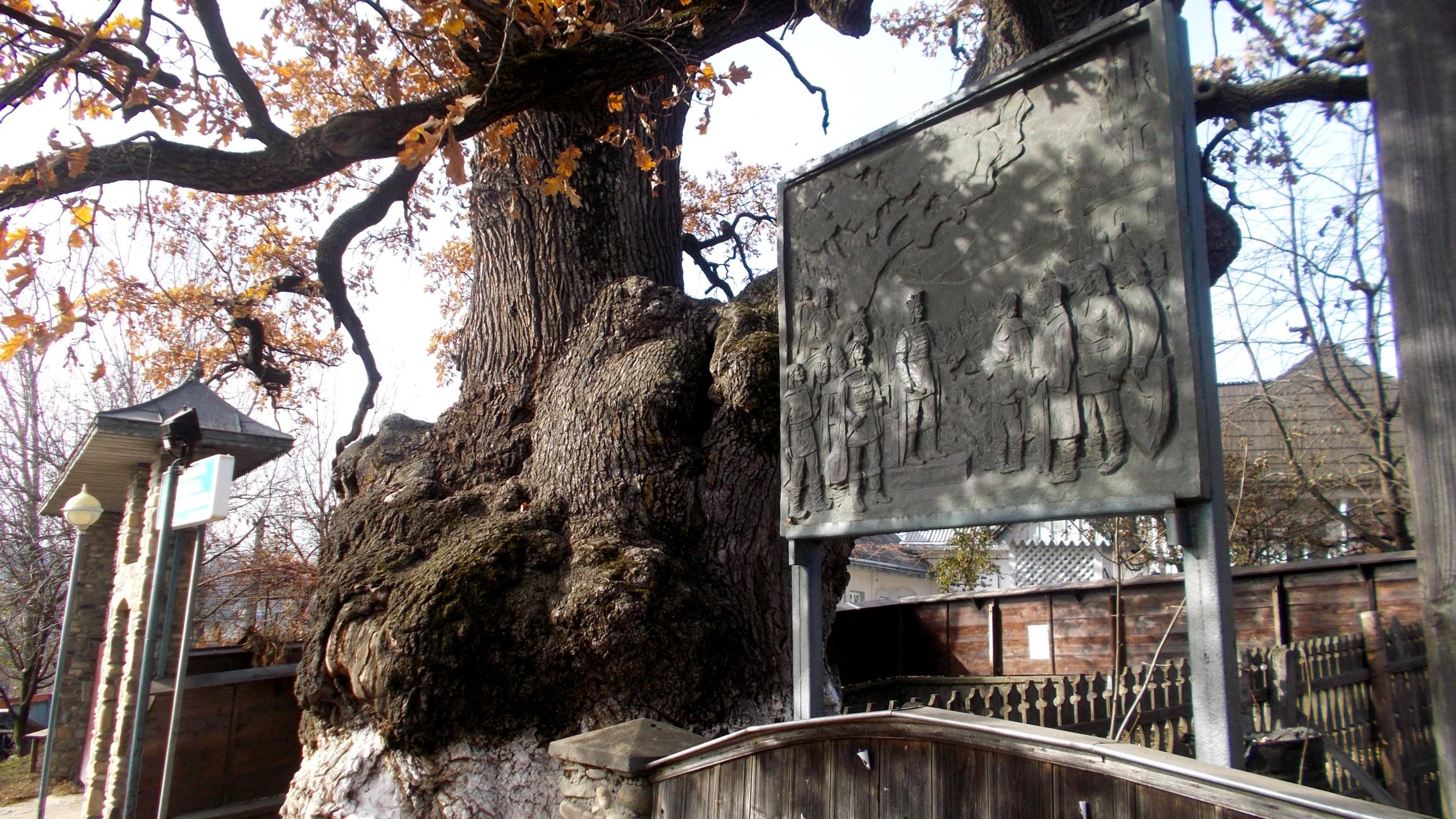 Legendarul Stejar, sub care s-a odihnit Ştefan cel Mare