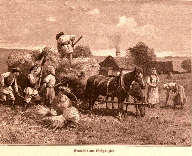 Tipologii rutene: Claca la grâu, p. 829