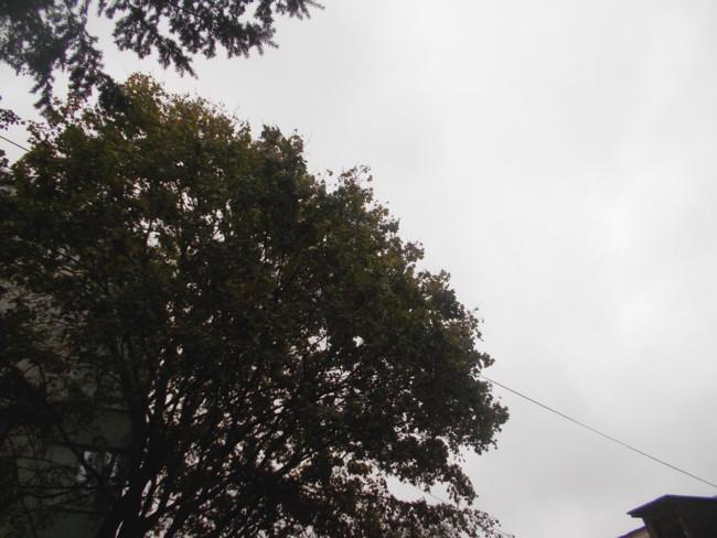 Toamna ploioasa 5