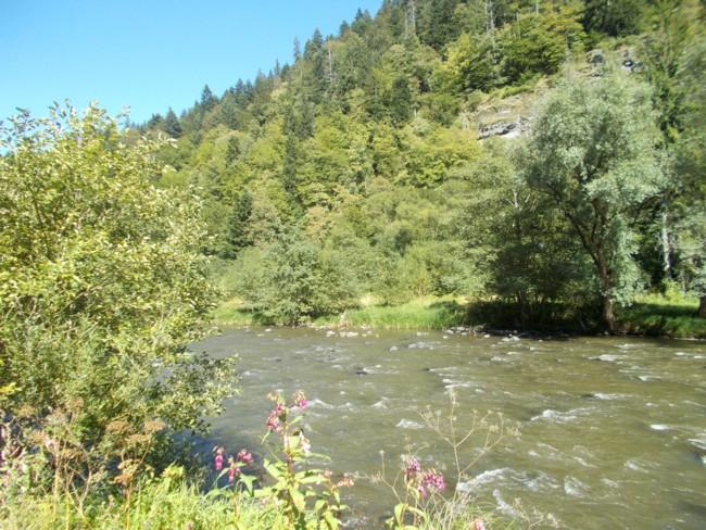 Valea Muresului 2