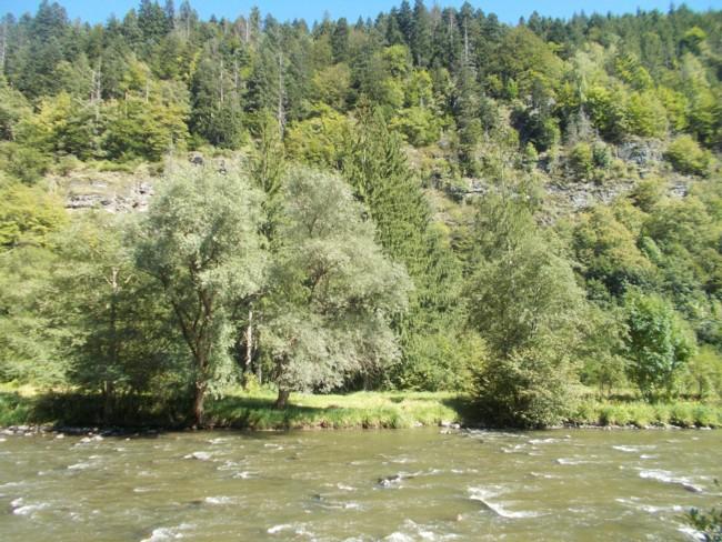 Valea Muresului 3