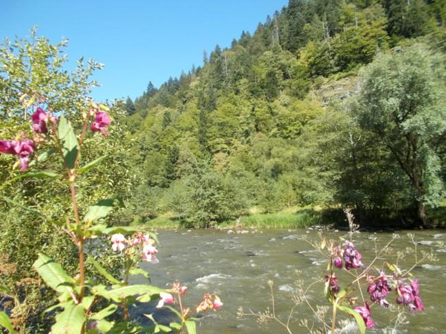Valea Muresului 4