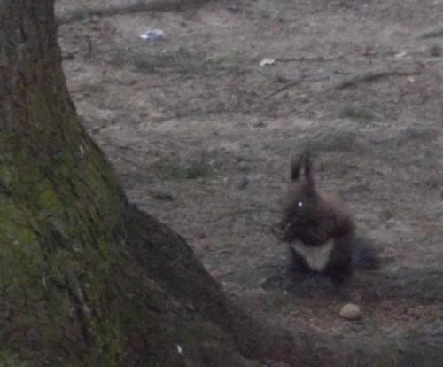 La Vatra Dornei, şi veveriţele te întâmpină cu prietenie