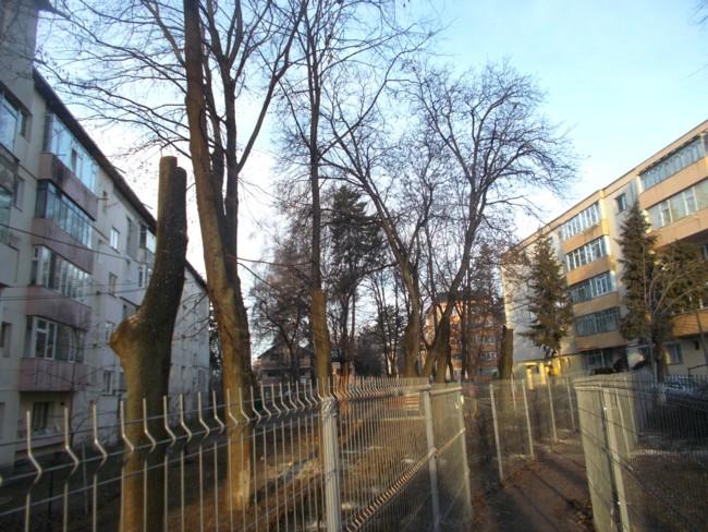 copaci macelariti 2