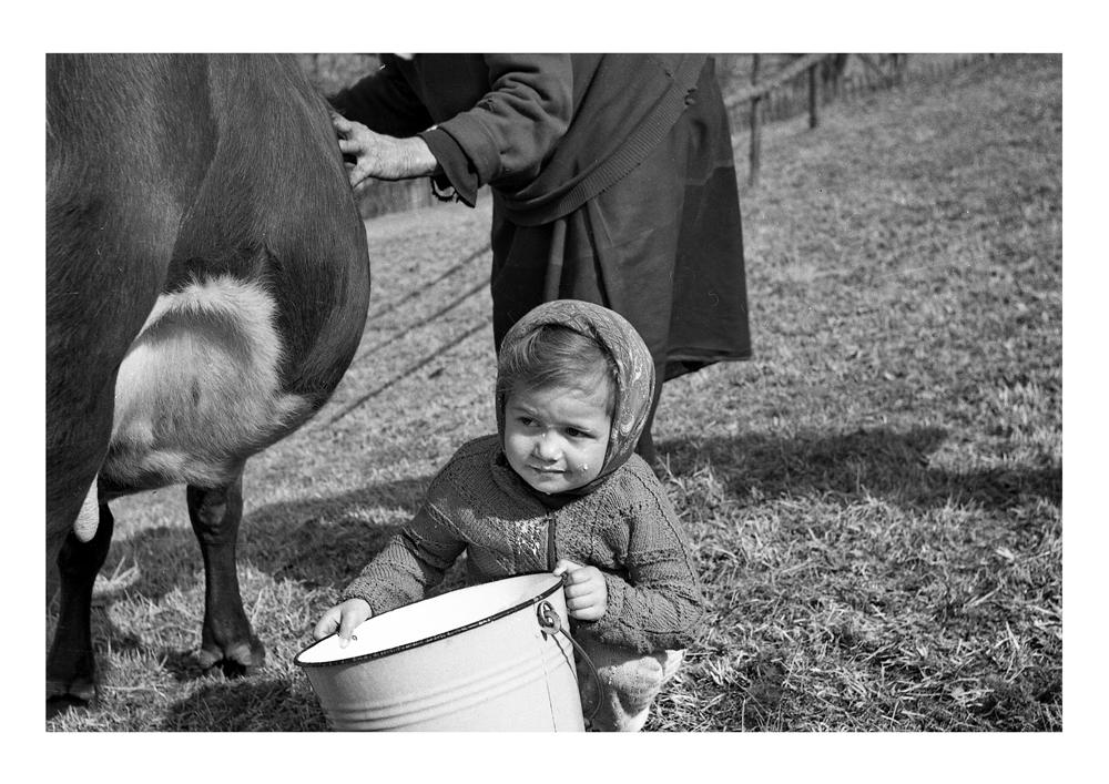 La ţâţa vacii